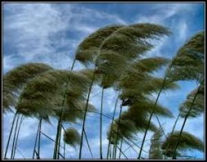 The Mysteries in Nature's Stead: The Wind